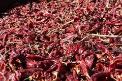 Paprica rossa che cresce a Betlemme della Galilea Fotografie Stock Libere da Diritti