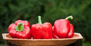 Paprika. Fruits of the red pepper on so Stock Photography