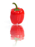 Paprika. Royalty Free Stock Photo