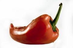 Paprika Imagem de Stock Royalty Free