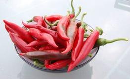 paprika Fotografia de Stock