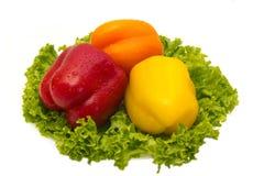 Paprika com salada. Imagens de Stock Royalty Free