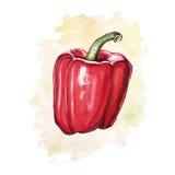 Paprika d'aquarelle avec la tache colorée photographie stock libre de droits