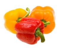 Paprika de couleur de plan rapproché avec des baisses sur le blanc Images stock