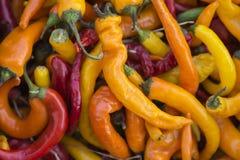 Paprika de Pimienta Fotos de archivo libres de regalías