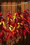 Paprika, der im hellen Sonnenschein hängt Lizenzfreie Stockfotografie