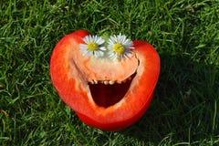 Paprika en la hierba Foto de archivo libre de regalías
