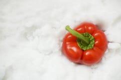 Paprika en nieve Fotografía de archivo libre de regalías