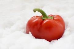 Paprika en nieve Fotos de archivo