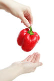 Paprika in hands Stock Photos