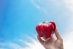 Paprika hielt in der Hand mit Himmel im Hintergrund Lizenzfreie Stockfotos