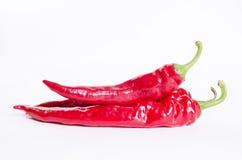Paprika. Isolated paprika on white background stock image