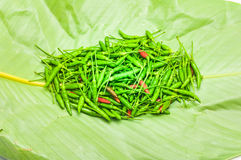 Paprika on the leaves. Pepper on the leaves,fresh chilli Stock Image