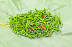 Paprika on leaves. Spicy herbs Royalty Free Stock Images
