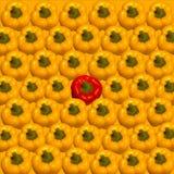 Paprika madura amarela brilhante Fotos de Stock Royalty Free