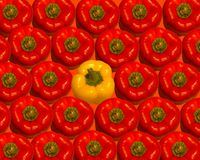 Paprika madura vermelha brilhante Ilustração Stock