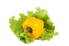 Paprika mit Salat Lizenzfreie Stockfotos