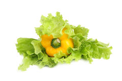Paprika mit Salat Lizenzfreie Stockfotografie