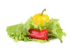 Paprika mit Salat Stockfotografie