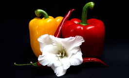 Paprika with peperoni and a flower stock images