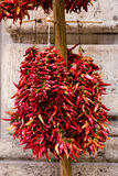 Paprika pepper in bunchs Royalty Free Stock Image