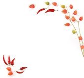 Paprika Pfeffer und Bodenkirsche Stockbilder