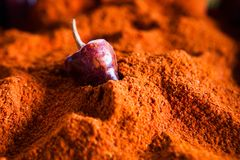Paprika powder and a whole pepper stock photography