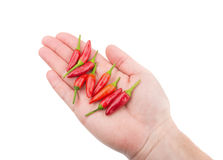 Paprika red pepper in hand for cooking. Stock Images