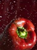Paprika rojo Imagenes de archivo