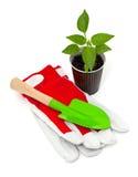 Paprika seedling, garden shovel and gloves Stock Photography