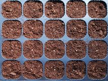 Paprika seeds sown on peat in black plastic pots. Top view stock photo