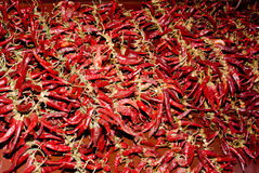 Paprika in spice store Royalty Free Stock Photography