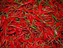 Paprika tailandesa roja Imagenes de archivo