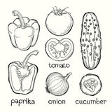 Paprika, tomato, onion, cucumber. Vector illustration on white b Royalty Free Stock Photo