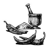 Paprika. Vector  illustration of a paprika stylized as engraving Royalty Free Stock Image
