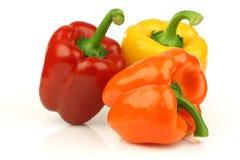 Paprika vermelho, alaranjado e amarelo (capsicum) Fotos de Stock Royalty Free