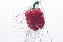 Paprika In water on a white background Royalty Free Stock Image