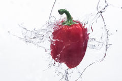 Paprika In water on a white background Royalty Free Stock Photos