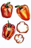 Paprika watercolor Royalty Free Stock Photo
