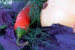 Paprikapfeffer mit Dill und Zwiebel Stockfoto