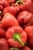 Paprikas rouges Photographie stock