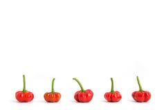 Paprikas rouges dans la ligne Photo libre de droits