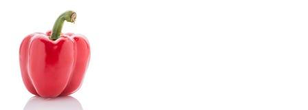 Paprikas rouges mûrs D'isolement sur le blanc Images stock