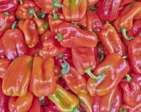 Paprikas rouges organiques Images stock