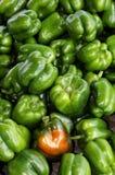 Paprikas verdes orgánicos Foto de archivo