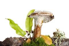 Paproć i grzyby zdjęcie royalty free