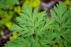 Paproć liścia wiosny w akcję obrazy stock