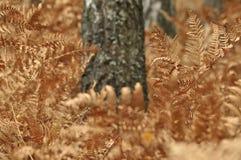 Paproć liście w lasowych nieboszczyków liściach Brown kolor Jesień Zdjęcia Stock