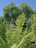 Paproć rozgałęzia się z drzewami behind Zdjęcia Stock