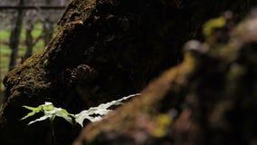 Paproć w lesie zbiory wideo